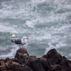 Seagull Perch over the Ocean