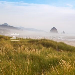 Dune Scene in Cannon Beach