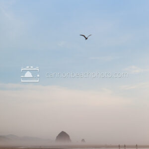 Single Seagull Flight Over Haystack Rock