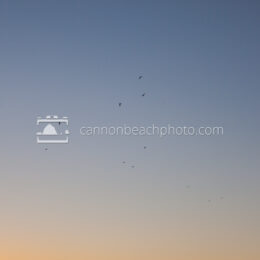Gradient Background with a Few Seagulls in Flight