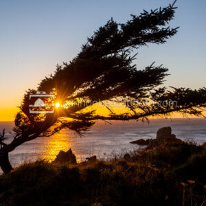 Wind Blown Tree at Ecola Point at Sunset