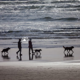 Dogs Leash Free on the Beach 1