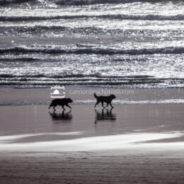 Dogs Leash Free on the Beach 2